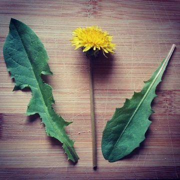 Don't Spray Your Dandelions! Do this instead.