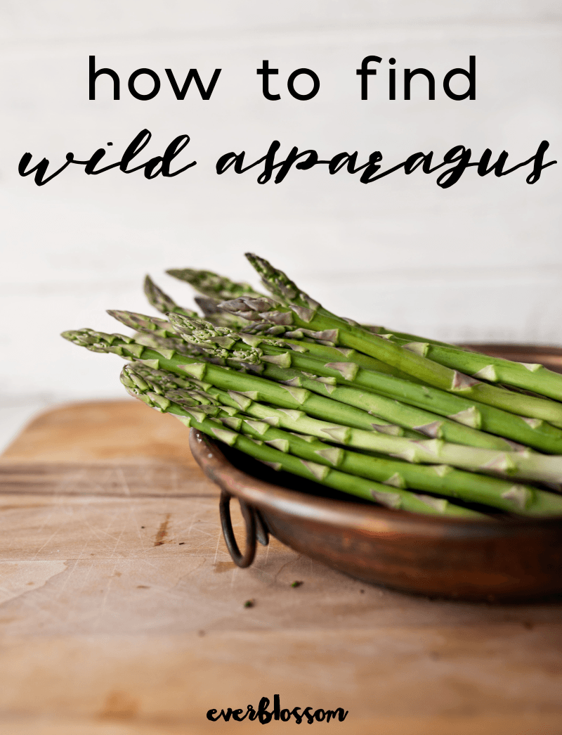 Bowl of asparagus with caption: how to find wild asparagus