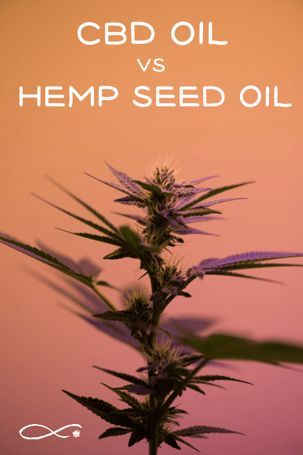 "Cannabis plant with caption: ""CBD oil vs Hemp Seed Oil"""