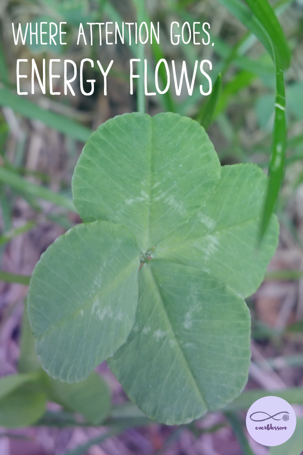 "Four leaf clover with quote: ""Where attention goes, energy flows."""