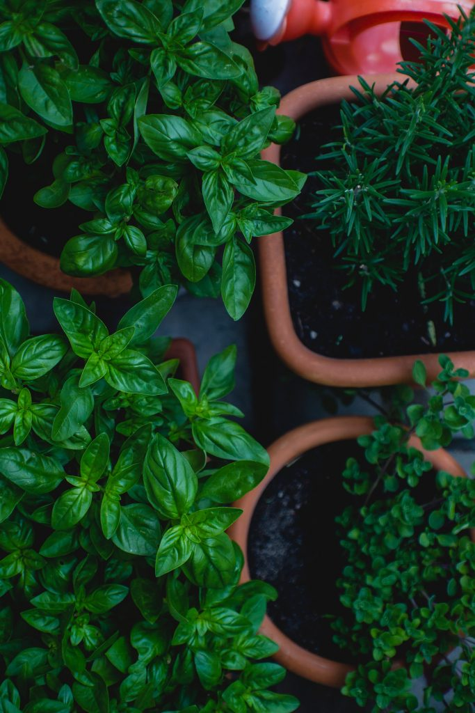 Herbs planted in pots, view from above.