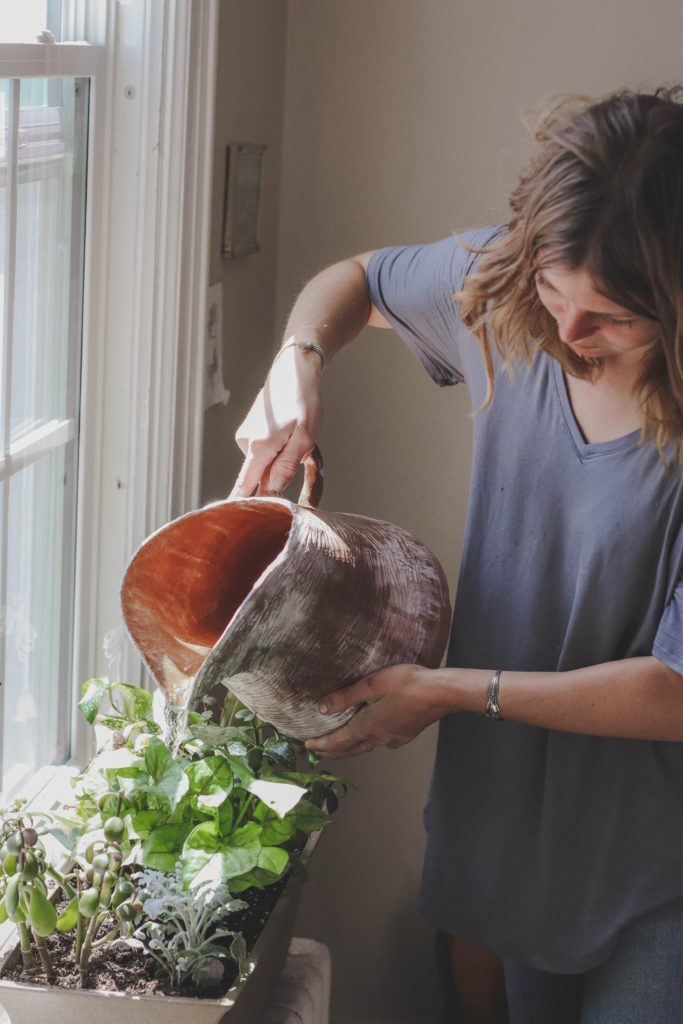 Woman watering an indoor herb garden near a window using a large clay vessel.